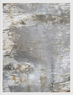 More silvery birch paper ready for download (247x320, 70Kb)