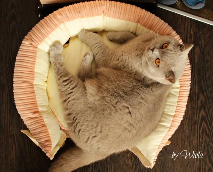 Как сшить кроватку для кошки. Мастер-класс (12) (700x566, 301Kb)