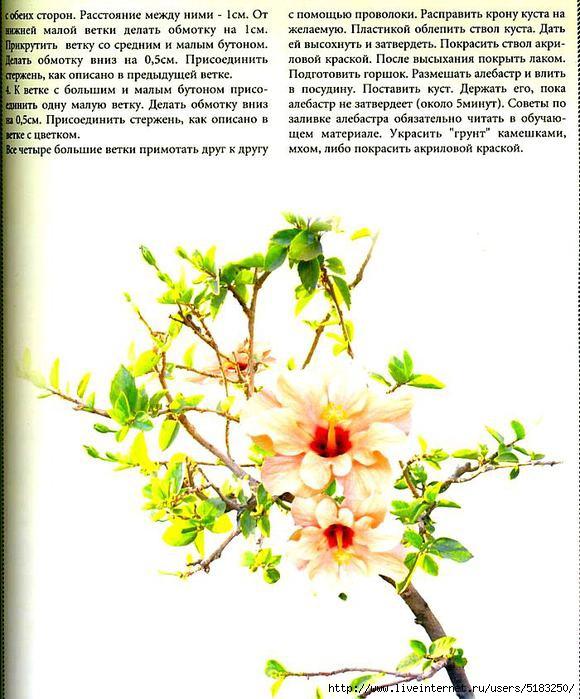 5183250_kyst_gibiskysa3