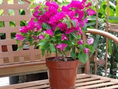 цветок (400x300, 42Kb)
