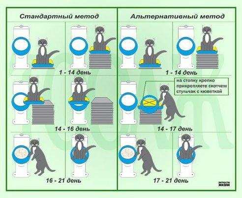 1387259295_kak_pricchit__kota_k_tualetu (492x403, 46Kb)