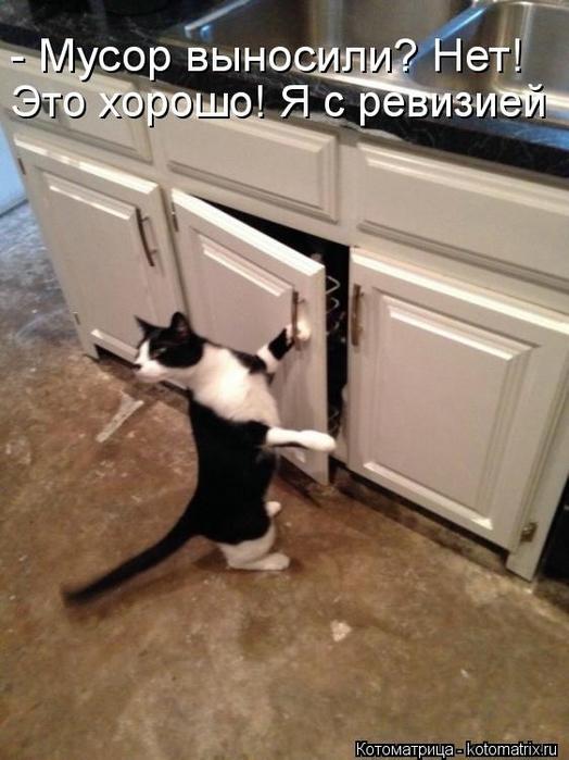kotomatritsa_5L (524x700, 220Kb)