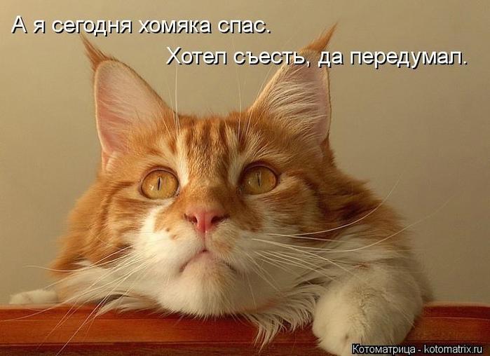 kotomatritsa_k7 (700x508, 217Kb)