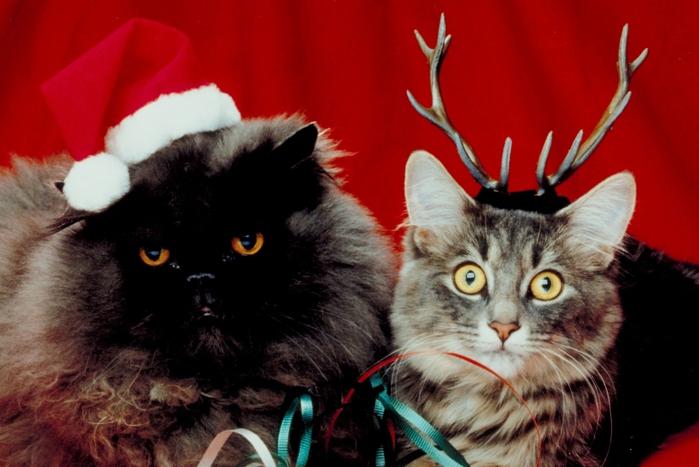 рождественские и новогодние коты1 (700x467, 222Kb)