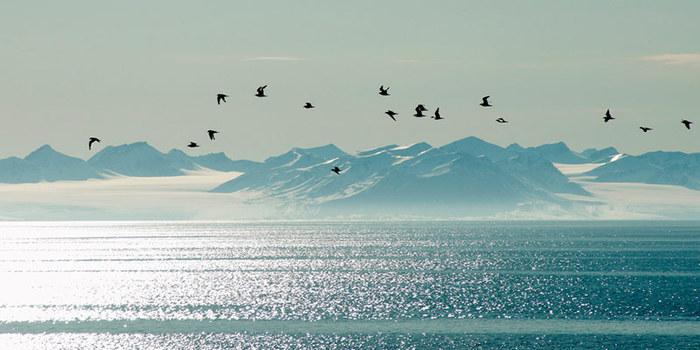 3578968_Spitsbergen_evening1 (700x350, 66Kb)