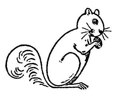 draw-squirrels-gfairyb (396x329, 64Kb)