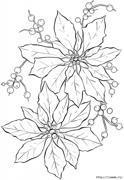 Poinsettia-Line-Art-GraphicsFairy-704x1024 (481x700, 191Kb)