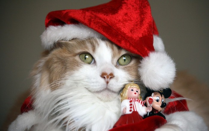 Cat Christmas Costume Toys Desktop Wallpapers and Backgrounds.