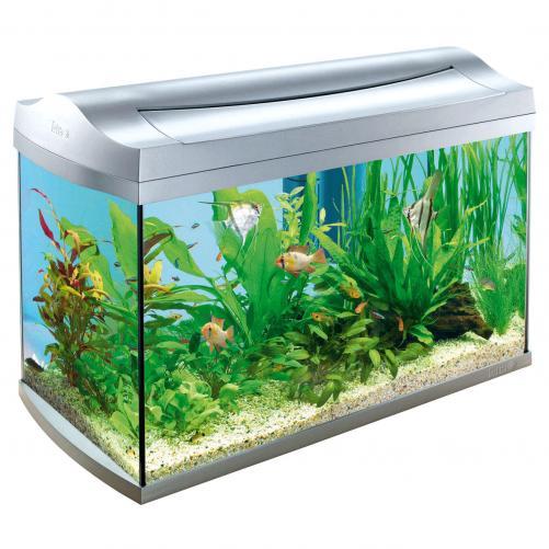 аквариум 2 (501x501, 190Kb)