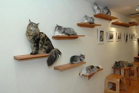 Домики для кошек и котов Когтеточки для кошек Питомник