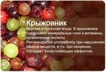 Превью MW515uyK_tE (590x400, 162Kb)