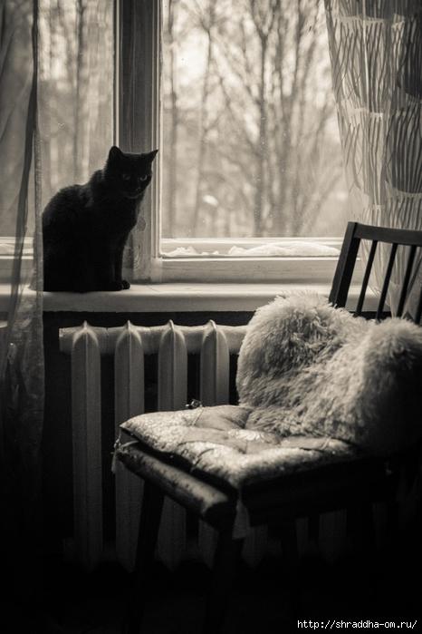 Человек и Кошка (1) (466x700, 207Kb)