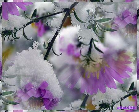 Цветы-в-снегу (450x363, 301Kb)