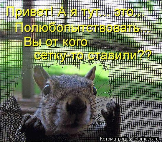 kotomatritsa_6N (550x480, 286Kb)