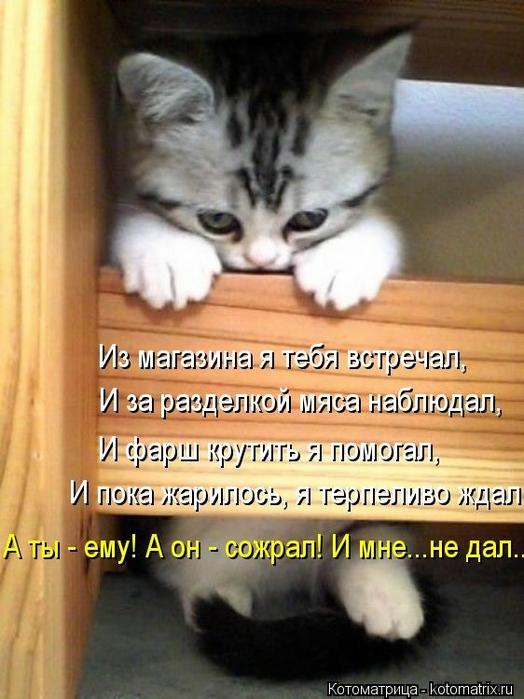 kotomatritsa_27 (524x700, 240Kb)