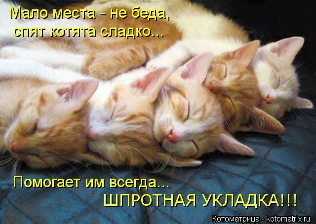 kotomatritsa_C9 (640x455, 152Kb)