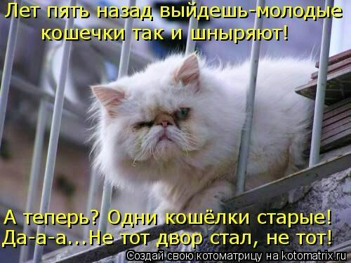 kotomatritsa_q3 (500x375, 115Kb)