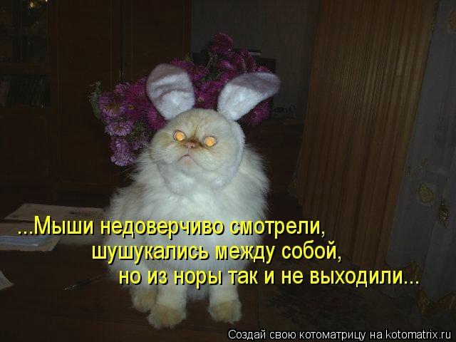 kotomatritsa_rk (640x480, 108Kb)