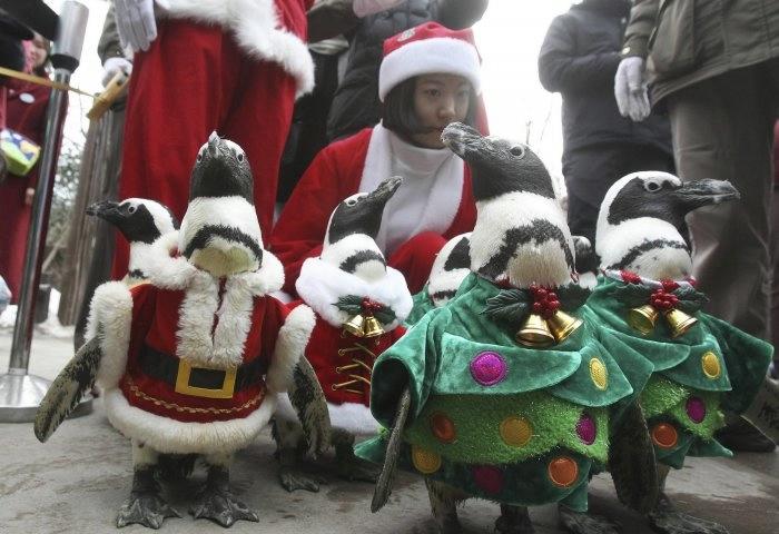 пингвины фото 3 (700x480, 157Kb)