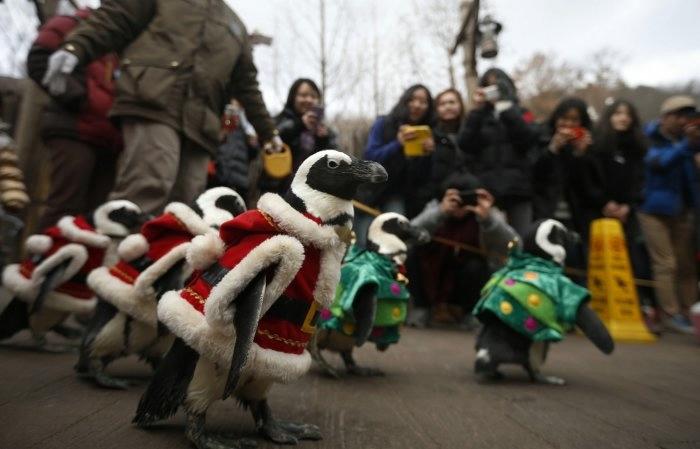пингвины фото 9 (700x449, 106Kb)