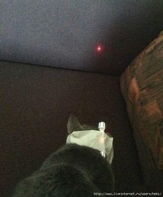 cat_02 (550x668, 124Kb)