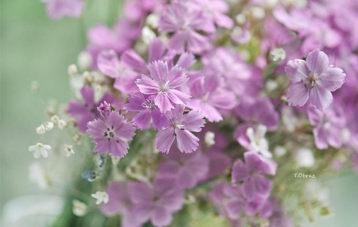 Нежные цветы зимы