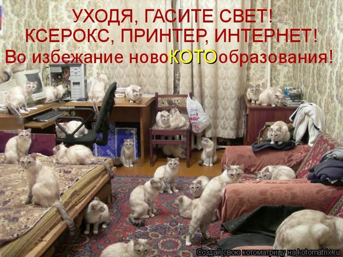 Котоматрица - 2013 kotomatritsa_p (700x524, 312Kb)