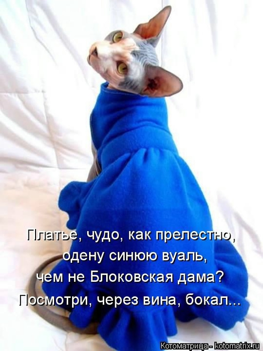 Котоматрица - 2013 kotomatritsa_2m (525x700, 195Kb)