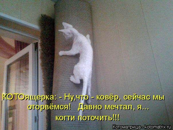Котоматрица - 2013 kotomatritsa_q (604x453, 132Kb)