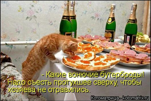 Котоматрица - 2013 kotomatritsa_X1 (530x354, 125Kb)