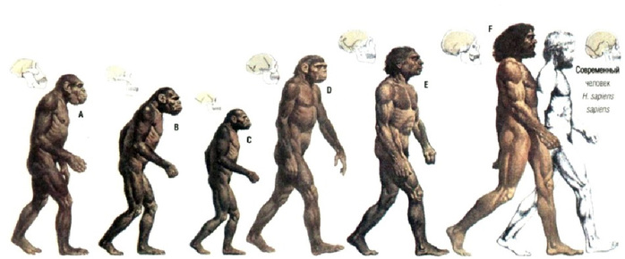 Evoluciya_man (700x290, 66Kb)