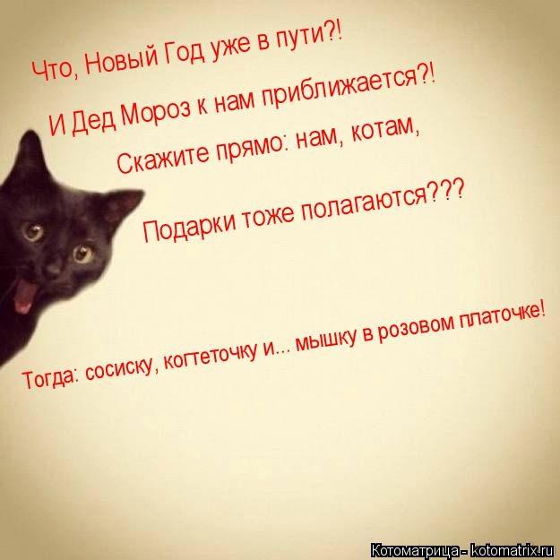 kotomatritsa_E_ (625x625, 109Kb)