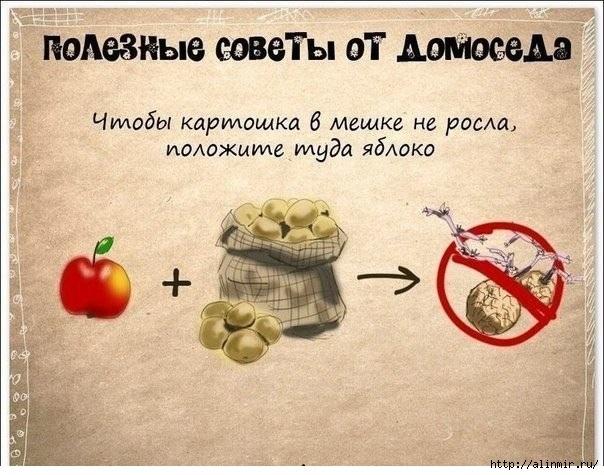 полезные советы картошка (604x475, 199Kb)