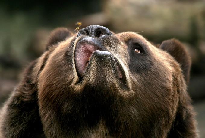медведь фото 3 (680x456, 256Kb)