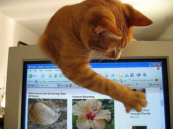 Коты, компьютеры и дети