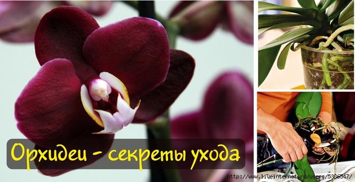 орхидеи (700x359, 198Kb)