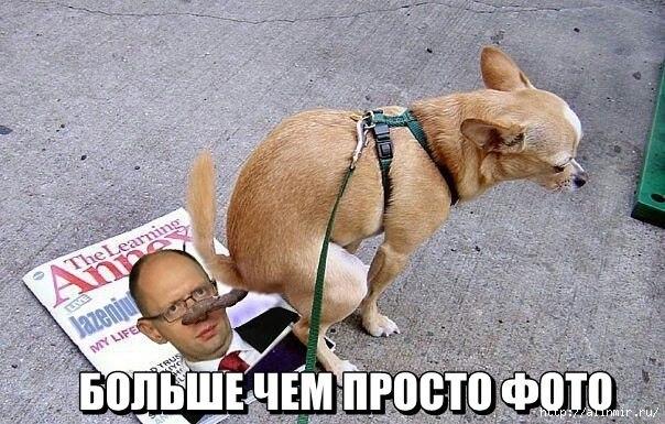 собака (604x385, 185Kb)