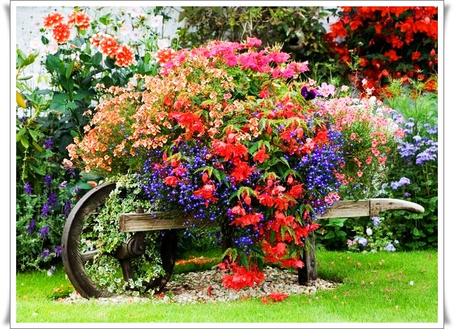 Мечты и реальность садово дачные