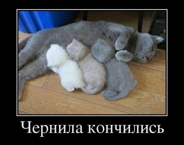 котята (604x478, 49Kb)