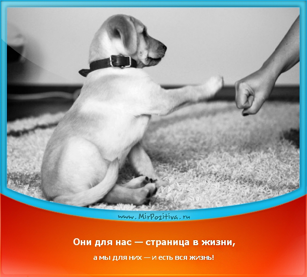 Для собак мы вся жизнь цитаты