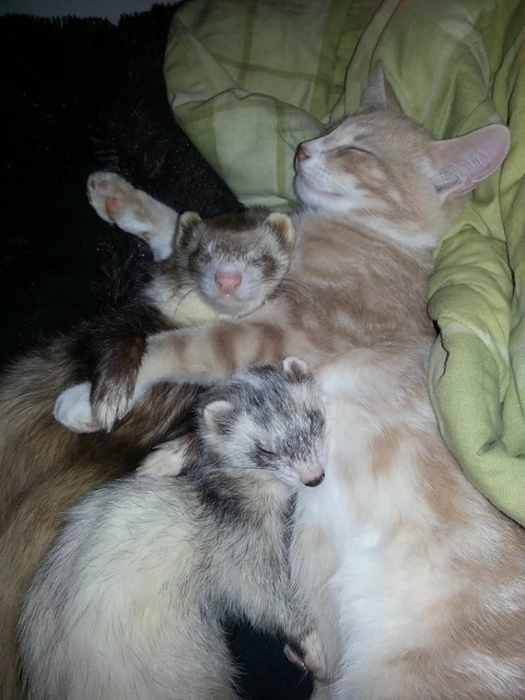 дружба животных фото 11 (525x700, 221Kb)