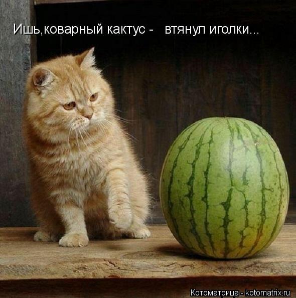 kotomatritsa_j (590x594, 126Kb)