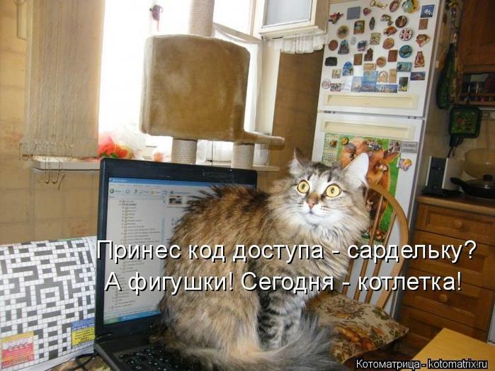 kotomatritsa_qr (700x524, 278Kb)