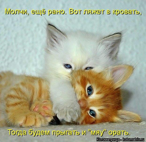 kotomatritsa_t (623x605, 175Kb)
