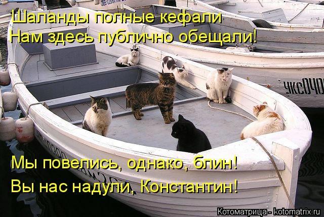 kotomatritsa_tX (640x428, 202Kb)
