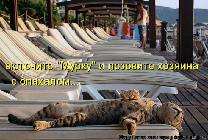 kotomatritsa_ue (700x469, 256Kb)