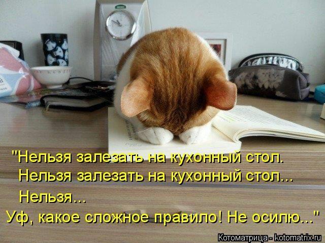 kotomatritsa_xf (640x480, 168Kb)