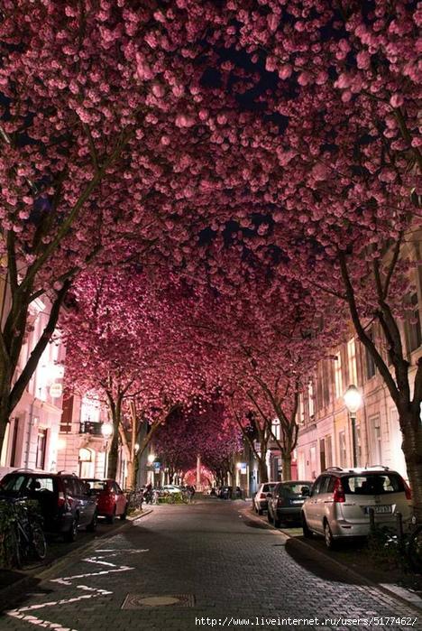015 10 самых красивых тоннелей из деревьев в мире/5177462_original (468x700, 344Kb)