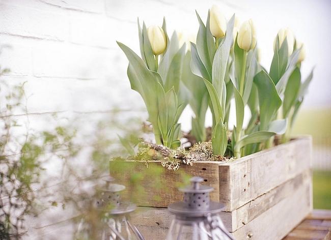 Луковичные цветы в интерьере. Подборка красивых фотографий (2) (650x472, 286Kb)