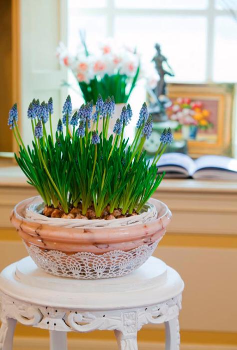 Луковичные цветы в интерьере. Подборка красивых фотографий (4) (475x700, 340Kb)